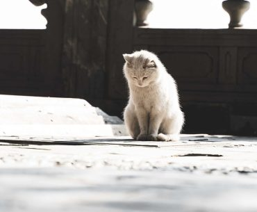 Cat looking at the ground